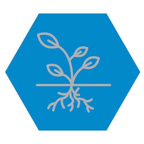Jordforbedrende avlinger1