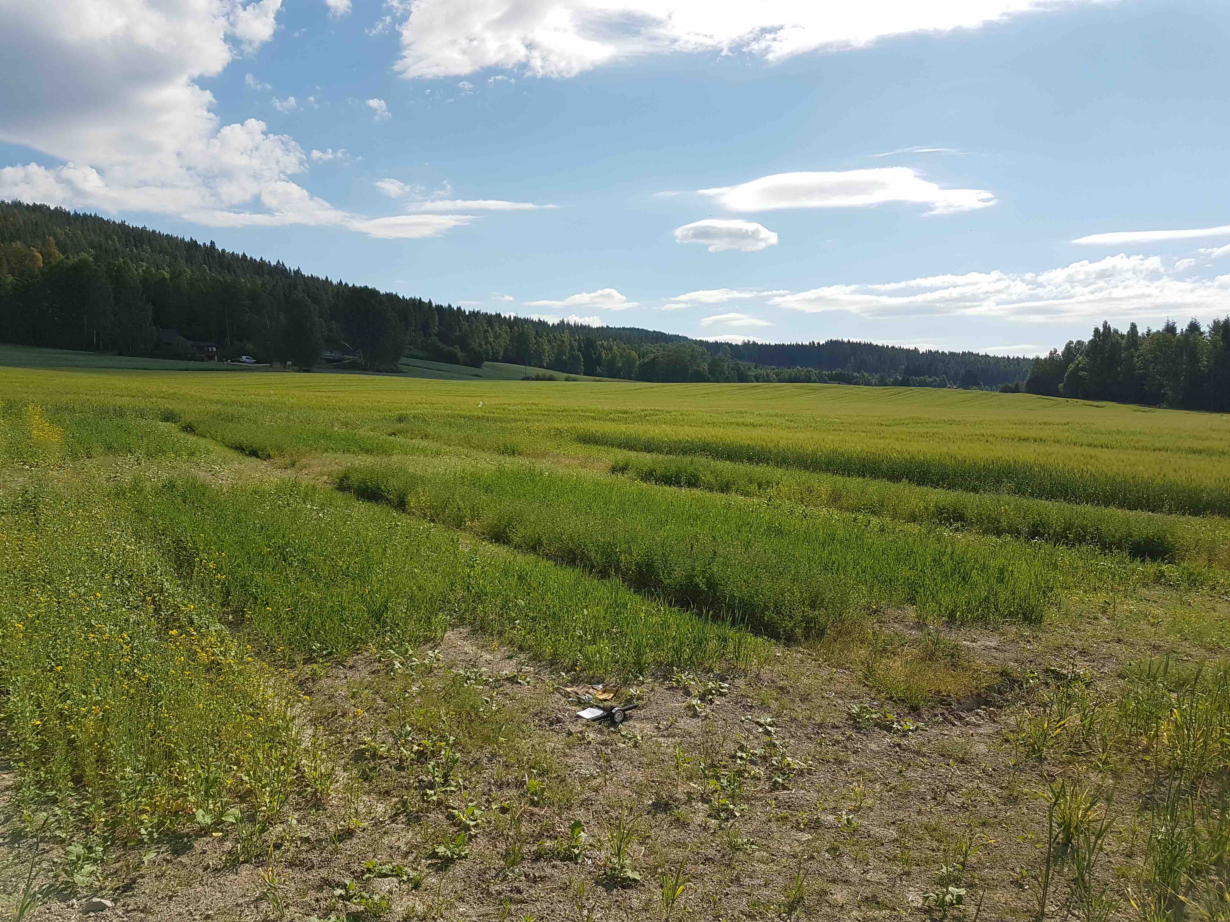 Forsøksfelt SoilCare Solør lipiec 2018 T.Seehusen