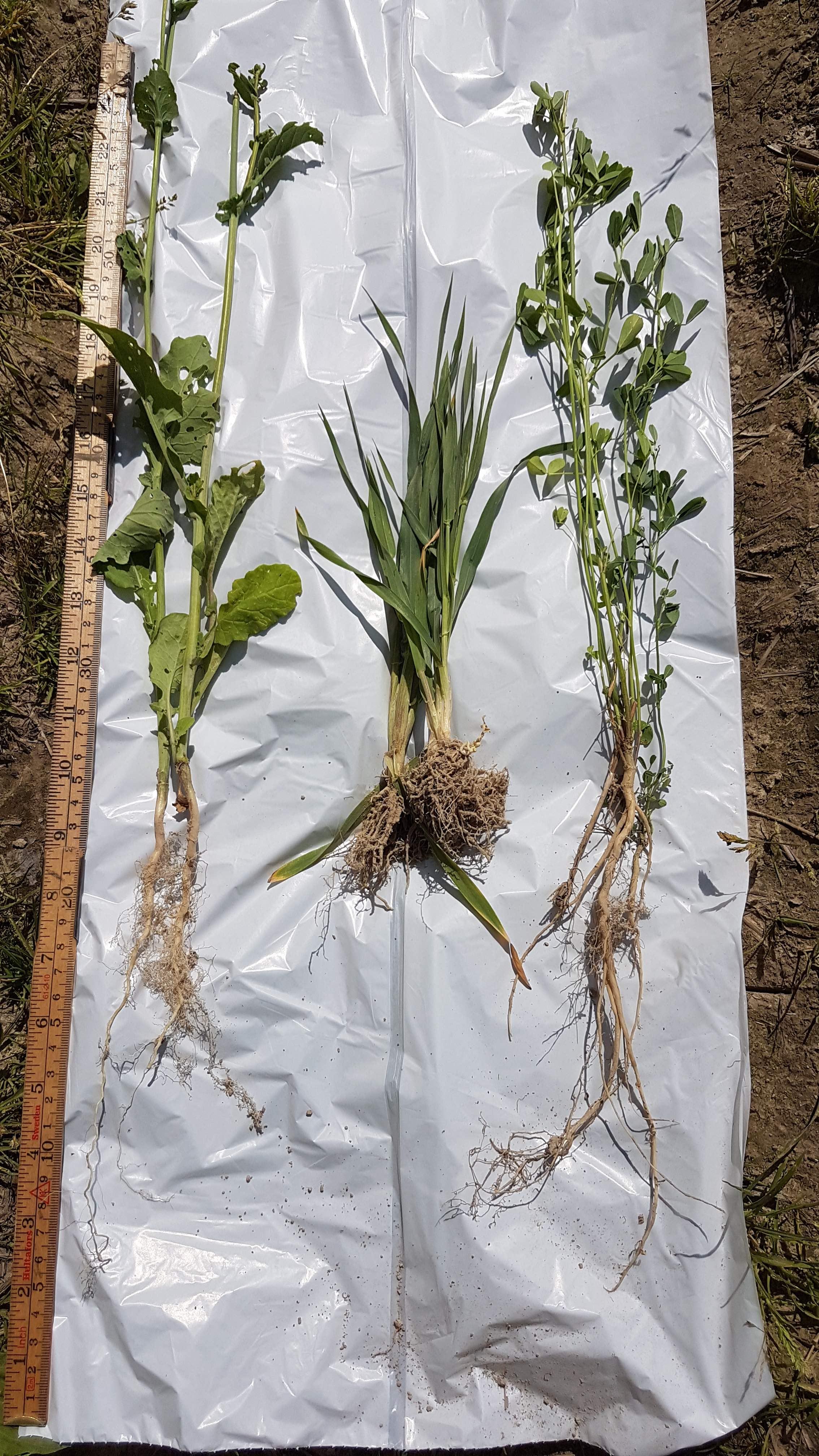 Plantenbak SoilCare Solør T. Seehusen